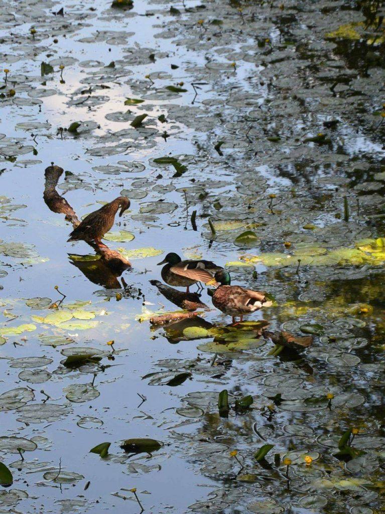 woda-zrodlem-zycia-natalia-cizewska